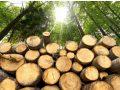 Le bois de chauffage écologique à Uzès : une source d'énergie renouvelable et locale