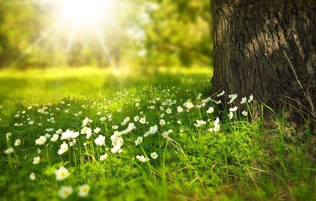 Miser sur le parrainage pour passer à l'énergie verte