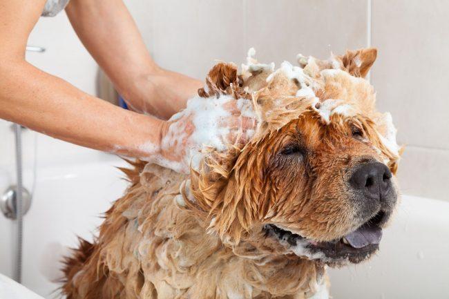 Shampoing pour chien : comment le choisir ?